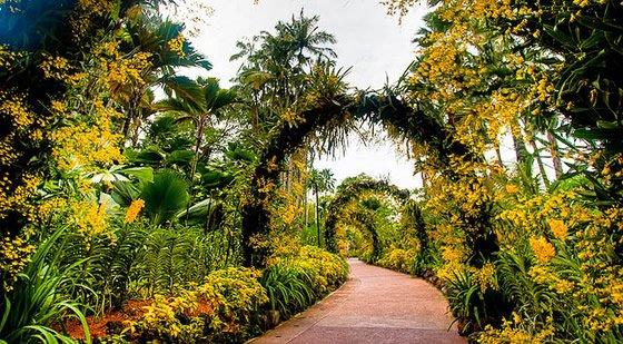 Botânico Nacional-Orchid Garden - Cingapura