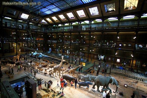Museum Histoire Naturelle Paris Muséum D'histoire Naturelle