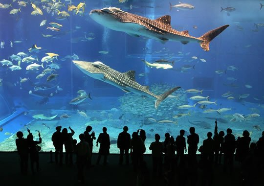 Dubai mall dubai aquarium is the largest suspended aquarium in the
