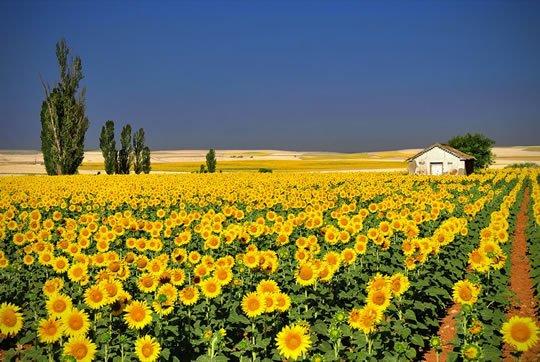 top 15 flower fields in the world